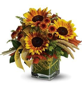 Teleflora's Funflowers by Davis Floral Comany, your Brownwood, Texas (TX) Florist