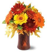 Autumn Gerberas by Davis Floral Comany, your Brownwood, Texas (TX) Florist