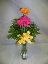 Gerbera Bouquet by Davis Floral Comany, your Brownwood, Texas (TX) Florist