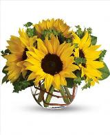 Sunny Sunflowers by Davis Floral Comany, your Brownwood, Texas (TX) Florist