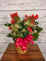 Red begonia, plant, house plant by Davis Floral Comany, your Brownwood, Texas (TX) Florist