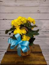 Begonia, Yellow by Davis Floral Comany, your Brownwood, Texas (TX) Florist
