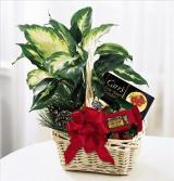 Holiday Hospitality Planter by Davis Floral Comany, your Brownwood, Texas (TX) Florist