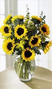 Endless Sunflower Bouquet by Davis Floral Comany, your Brownwood, Texas (TX) Florist