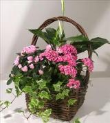 Blooming Gift Basket by Davis Floral Comany, your Brownwood, Texas (TX) Florist