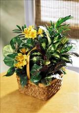 A Bit Of Sunshine™ Basket by Davis Floral Comany, your Brownwood, Texas (TX) Florist