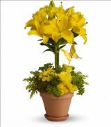 Yellow Fellow by Davis Floral Comany, your Brownwood, Texas (TX) Florist