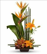 Exotic Grace by Davis Floral Comany, your Brownwood, Texas (TX) Florist
