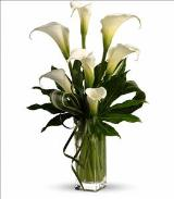 My Fair Lady by Teleflora by Davis Floral Comany, your Brownwood, Texas (TX) Florist