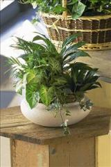 Green Garden Bowl by Davis Floral Comany, your Brownwood, Texas (TX) Florist
