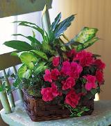 Garden Basket by Davis Floral Comany, your Brownwood, Texas (TX) Florist