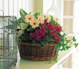 Medium European Basket by Davis Floral Comany, your Brownwood, Texas (TX) Florist