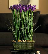 Blue Iris Stack by Davis Floral Comany, your Brownwood, Texas (TX) Florist