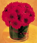 Red Gerbera Mound by Davis Floral Comany, your Brownwood, Texas (TX) Florist