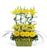 Yellow Garden Rows by Davis Floral Comany, your Brownwood, Texas (TX) Florist