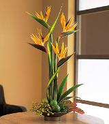 Birds of Paradise by Davis Floral Comany, your Brownwood, Texas (TX) Florist