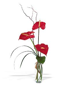 Anthuriums in a Vase by Davis Floral Comany, your Brownwood, Texas (TX) Florist