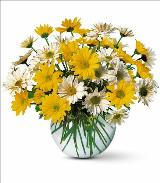 Daisy Bubble Bowl by Davis Floral Comany, your Brownwood, Texas (TX) Florist