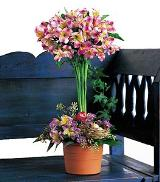 Alstroemeria Topiary by Davis Floral Comany, your Brownwood, Texas (TX) Florist