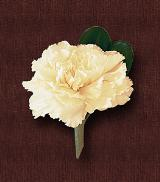 White Carnation Boutonniere by Davis Floral Comany, your Brownwood, Texas (TX) Florist