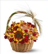 Harvest Basket by Davis Floral Comany, your Brownwood, Texas (TX) Florist