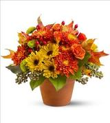 Sugar Maples by Davis Floral Comany, your Brownwood, Texas (TX) Florist