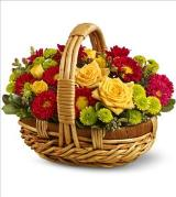 Bundle of Sunshine by Davis Floral Comany, your Brownwood, Texas (TX) Florist