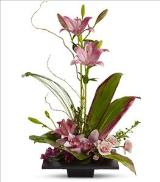 Imagination Blooms by Davis Floral Comany, your Brownwood, Texas (TX) Florist