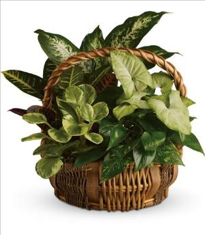 Emerald Garden Basket by Davis Floral Comany, your Brownwood, Texas (TX) Florist