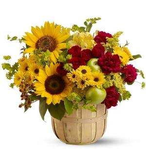 Farmer's Market by Davis Floral Comany, your Brownwood, Texas (TX) Florist