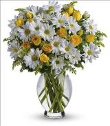 Amazing Daisy by Davis Floral Comany, your Brownwood, Texas (TX) Florist