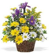 Iris & Daisy Basket by Davis Floral Comany, your Brownwood, Texas (TX) Florist